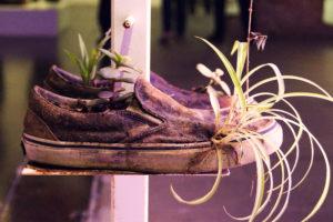 Michel-Blazy- scarpe -piante