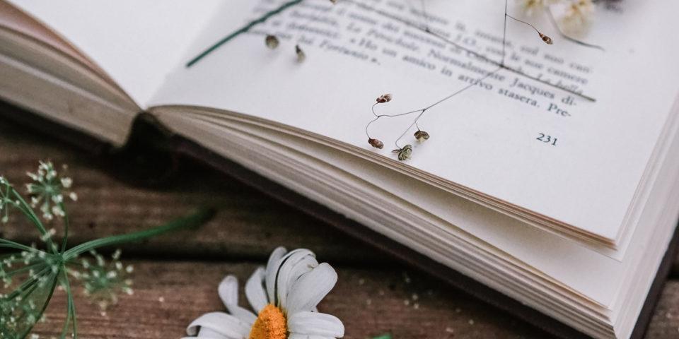 fiori-spontanei- di-montagna-messi-a-seccare-fra-le-pagine-di-un-libro