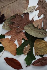 foglie-secche